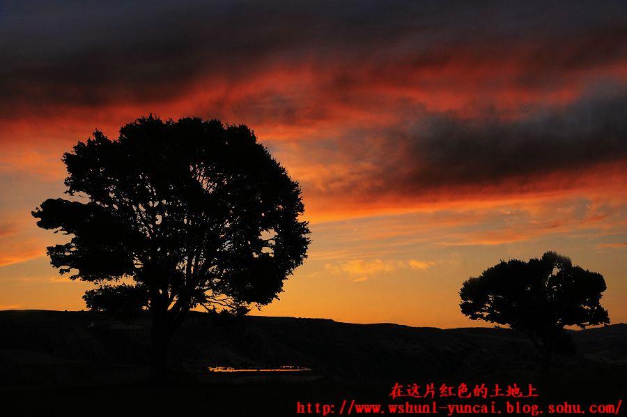 山上的比较有一点特色的树,在夕阳下的剪影.