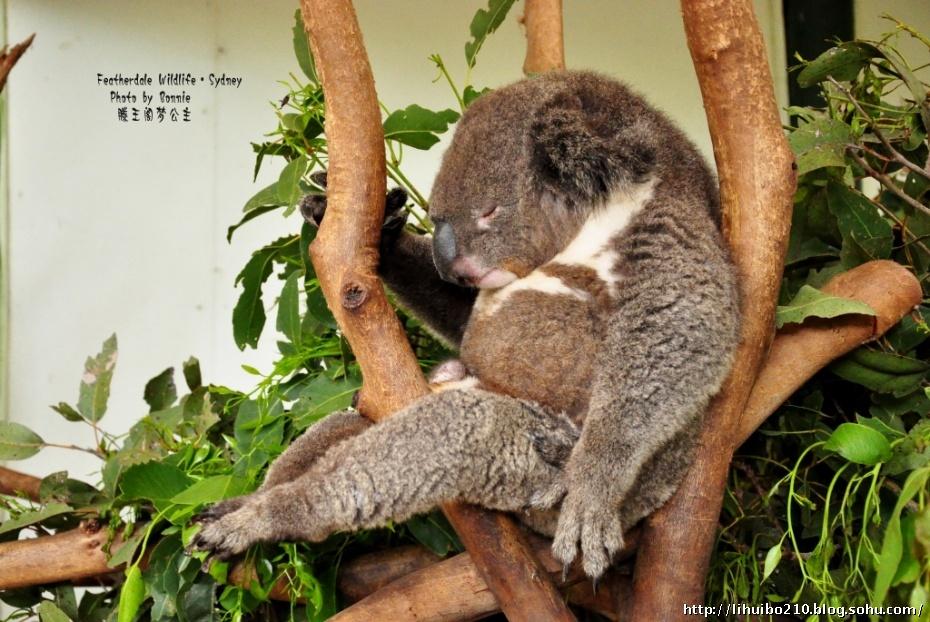 这个世界上最懒的动物