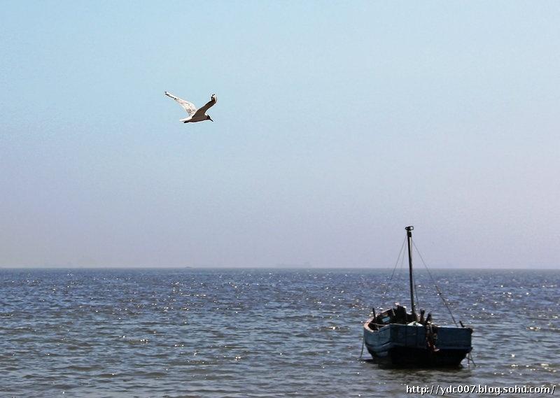 鸽子船风景图片