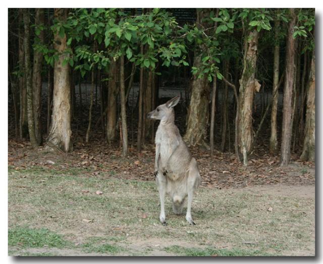 参观澳洲动物园 australia zoo