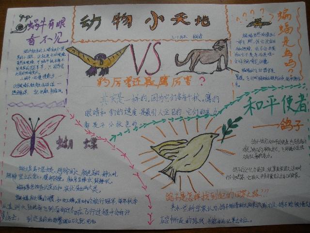 科学手抄报————动物小天地