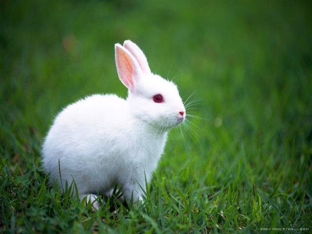 我喜欢我家的小白兔