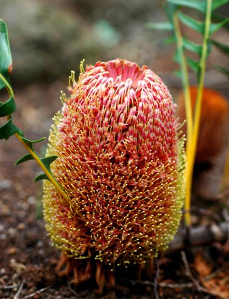 世界上最奇特 最大的花