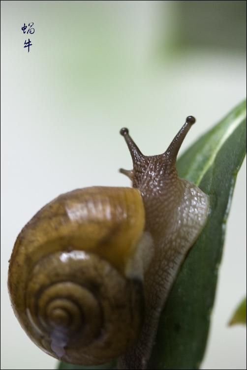 蜗牛背著那重重的壳呀, 一步一步地往上爬