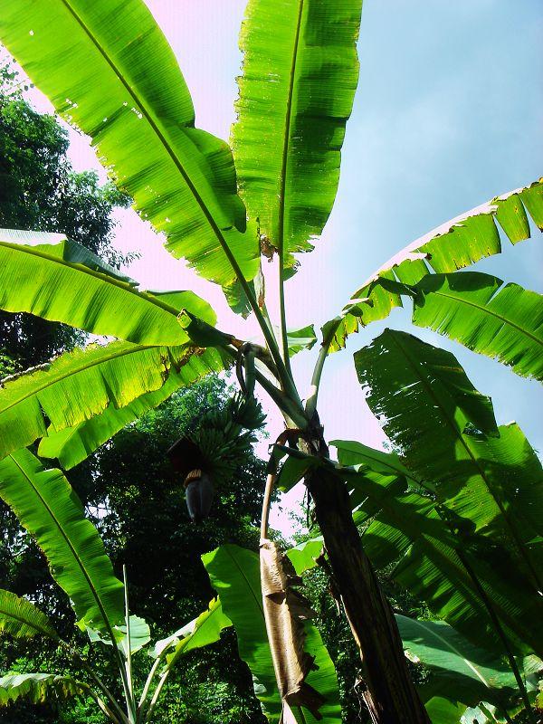 雨林树叶简笔画