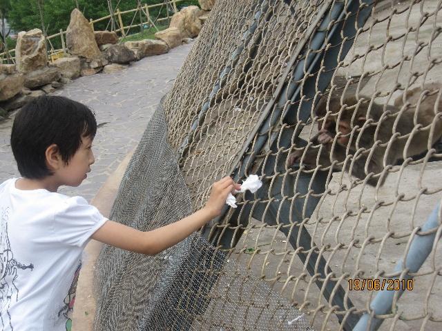动物园撕纸贴画