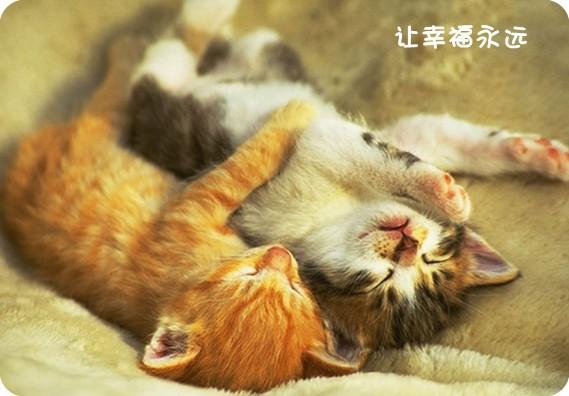 动物搂着睡觉图片