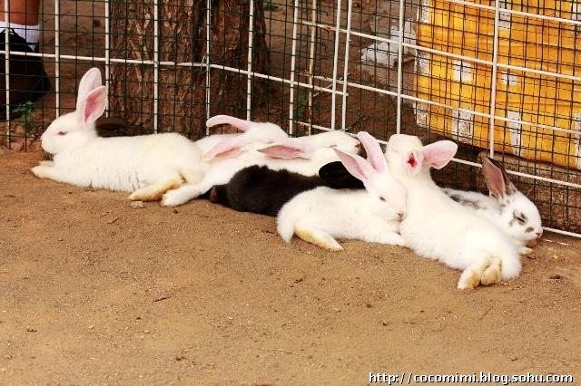 周六全家活动2——动物庄园与扒牛脸儿-小猫蜷缩在暖