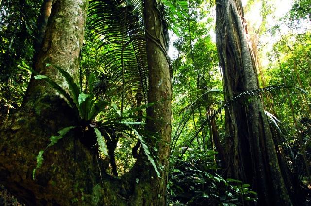 海南岛热带雨林_中国最大雨林的消亡 谁毁了海南天然林?-《DEEP中国科学探险 ...