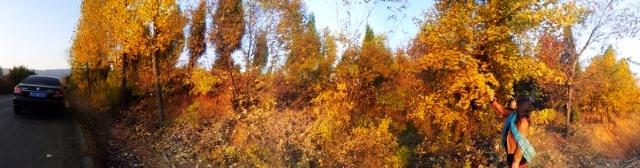 秋树林小路简笔画