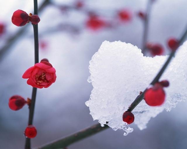 冬天雪花飞舞