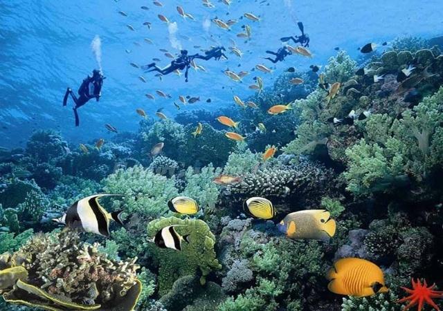壁纸 海底 海底世界 海洋馆 水族馆 桌面 640_450