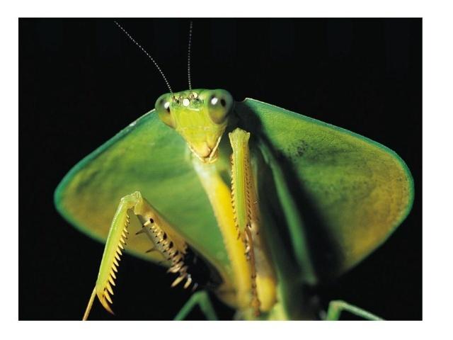 螳螂内部结构图片