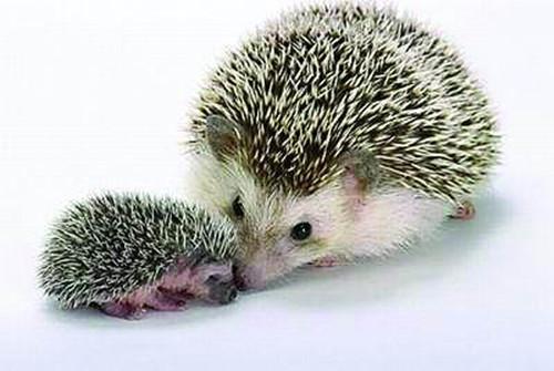 小动物和妈妈的对话